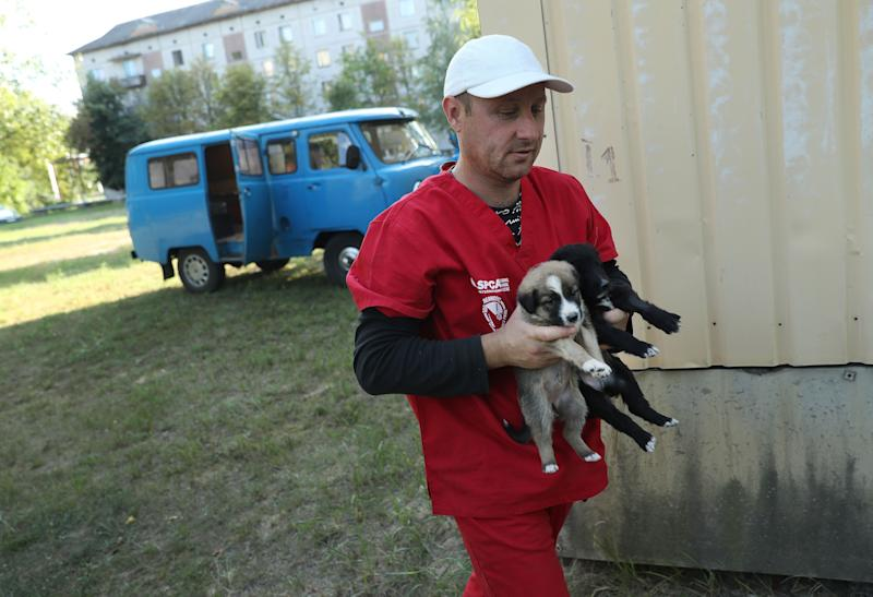 """Pavel """"Pasha"""" Burkatsky, a professional dogcatcher from Kiev, releases stray puppies that have been neutered and vaccinated inside the exclusion zone next to workers' dormitories near the Chernobyl nuclear power plant on August 18, 2017."""