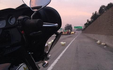 The California Highway Patrol says 20 chickens that ran through highway lanes near Los Angeles blocked a portion of Interstate 605 - Credit: CHP Santa Fe Springs