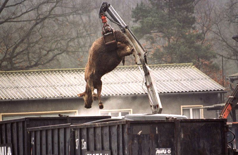 FILE PHOTO: The carcass of a cow suspected of having BSE hangs from a crane over a container at the knacker's ya..