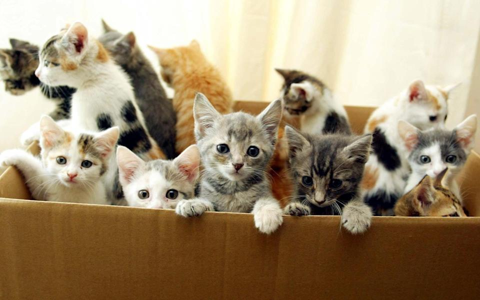 Kitten crisis: Thousands could be left homeless as owners can't neuter cats in lockdown - PA