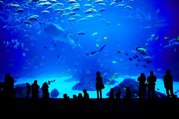 The marine park will host a range of sea animals: Getty Images/iStockphoto