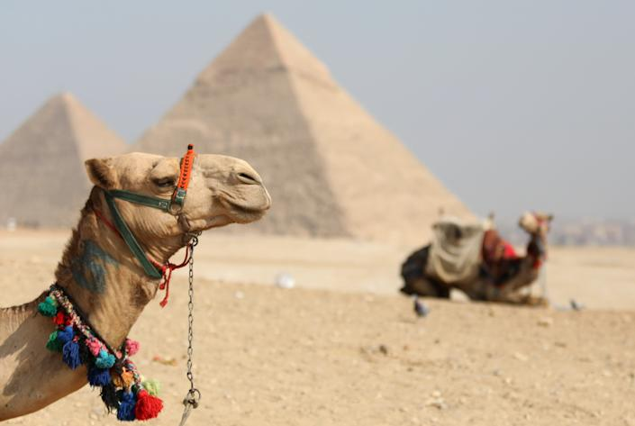 Camels on the background of the Great Pyramids, waiting for tourists in Giza, near Cairo. Egypt, Monday, December 31, 2018 (Photo by Danil Shamkin/NurPhoto via Getty Images)