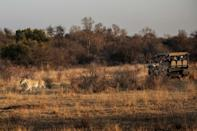 Tourists track a lioness at the Dinokeng Game Reserve outside Pretoria in 2020