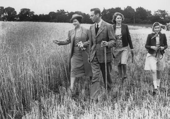 <p>Queen Elizabeth leads King George VI, and Princesses Elizabeth and Margaret around Sandringham Park, which was turned over to agricultural production to assist the war effort. </p>