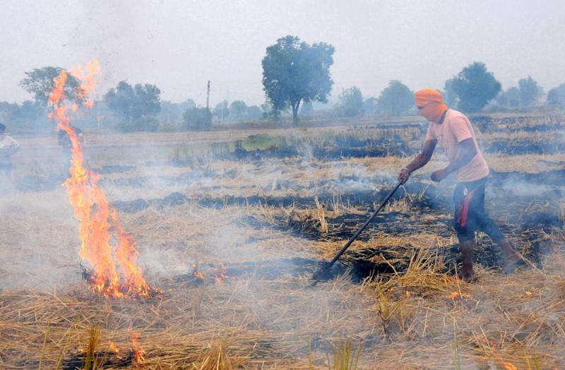 A farmer burns stubble near Amritsar, Punjab. The air quality has deteriorated as haze has engulfed the region