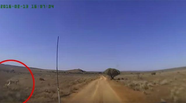 What's that Skip? Kangaroo makes a mad dash to cross a road in front of a 4WD. Source: YouTube/Dash Cam Owners Australia