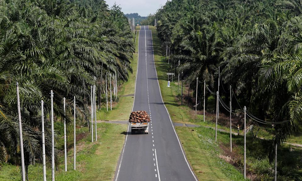 A truck carrying oil palm fruits passes through Felda Sahabat plantation in Lahad Datu in Malaysia's state of Sabah on Borneo island. (Reuters file photo)
