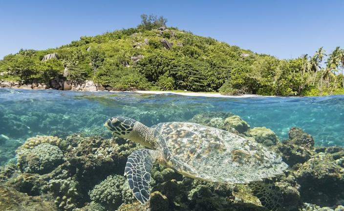 Turtle in front of an island