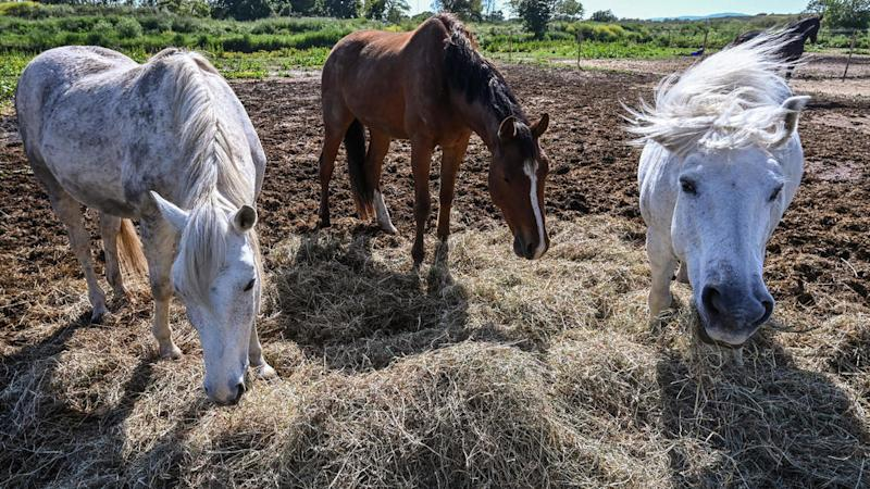 French police struggle to solve mystery of violent horse attacks