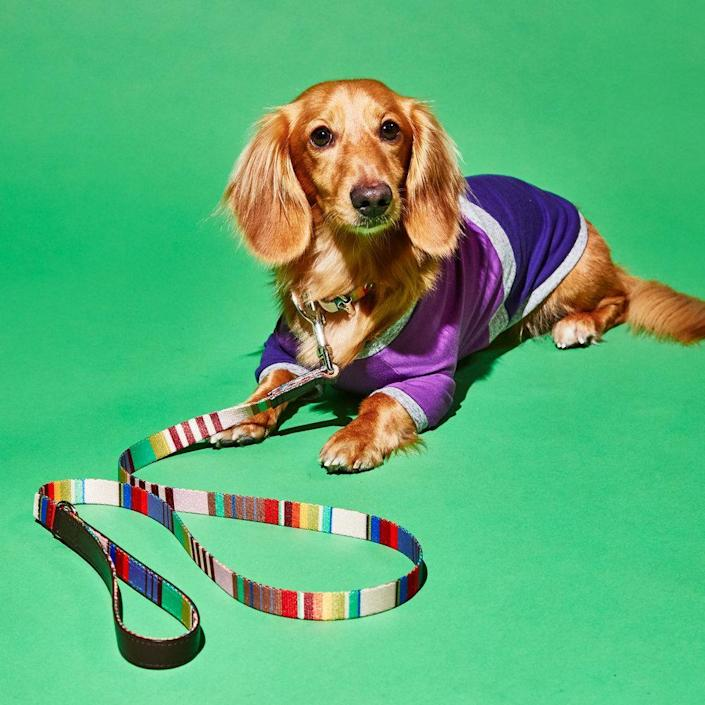 """$38, Ware of the Dog. <a href=""""https://wareofthedog.com/collections/leashes-collars/products/striped-webbing-leash-collarbr-blue-multilt-grey-wnwhe-tnb8e"""" rel=""""nofollow noopener"""" target=""""_blank"""" data-ylk=""""slk:Get it now!"""" class=""""link rapid-noclick-resp"""">Get it now!</a>"""