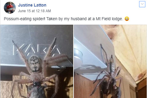 Justine Latton shared the image her husband had taken on a Facebook group about spiders (Justine Latton/Facebook)