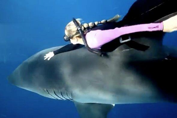 Meet the female diver who swims with great white sharks