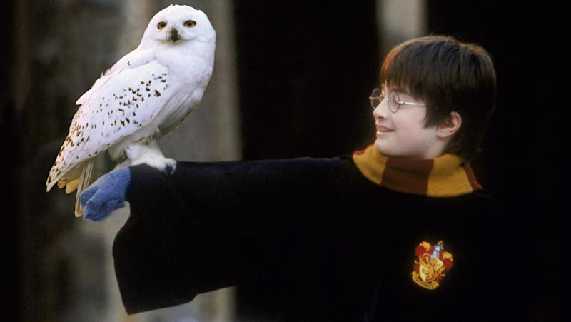 Harry Potter et sa chouette, Hedwige. - Warner Bros.