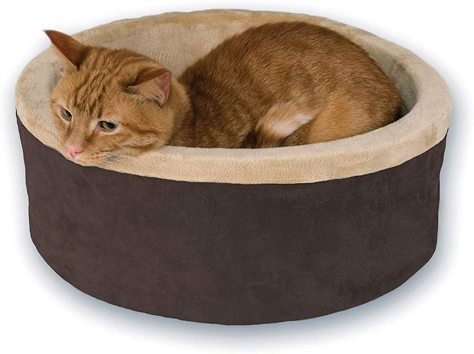 Get Your Pet a Heated Cat Bed