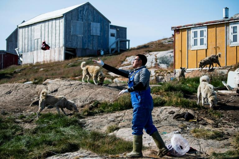 Climate change is casting a shadow over the much loved tradition in Greenland of dog sledding