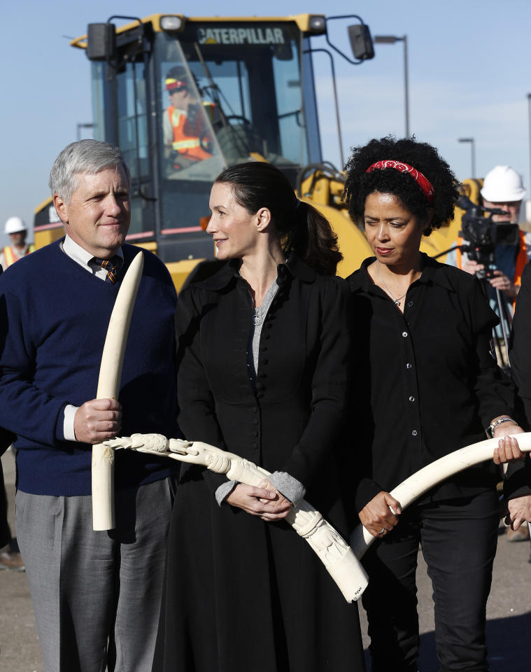 Actress Kristin Davis, center, stands with former Deputy secretary of the Interior David Hayes, left, and National Geographic conservationist Dr. Paula Kahumbu, as the three carry confiscated ivory to be destroyed during an event at the National Wildlife Property Repository, at Rocky Mountain Arsenal National Wildlife Refuge, in Commerce City, Colo., Thursday Nov. 14, 2013. Six tons of banned elephant ivory was destroyed Thursday after being accumulated over the past 25 years, seized during undercover investigations of organized smuggling operations or confiscated at the U.S. border. (AP Photo/Brennan Linsley)