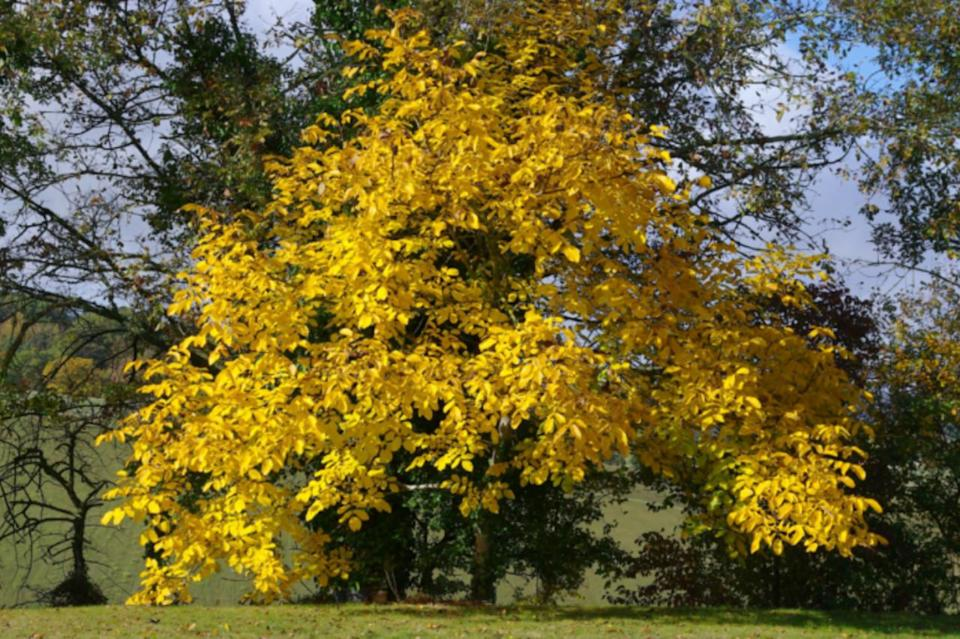 QUIZ YOURSELF: Can you name that tree?
