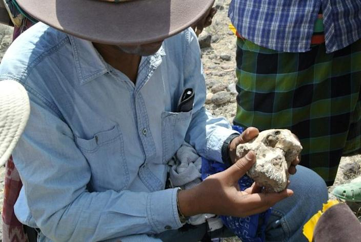 The 3.8-million-year-old skull of the early human was unearthed in Ethiopia (AFP Photo/HO)