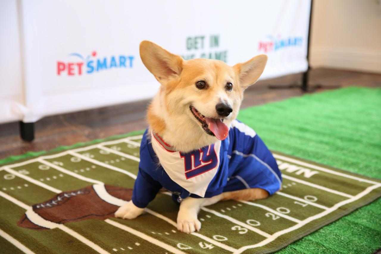 <p>Already gearing up for Sunday's big game! <i>(Photo: Petsmart)</i></p>