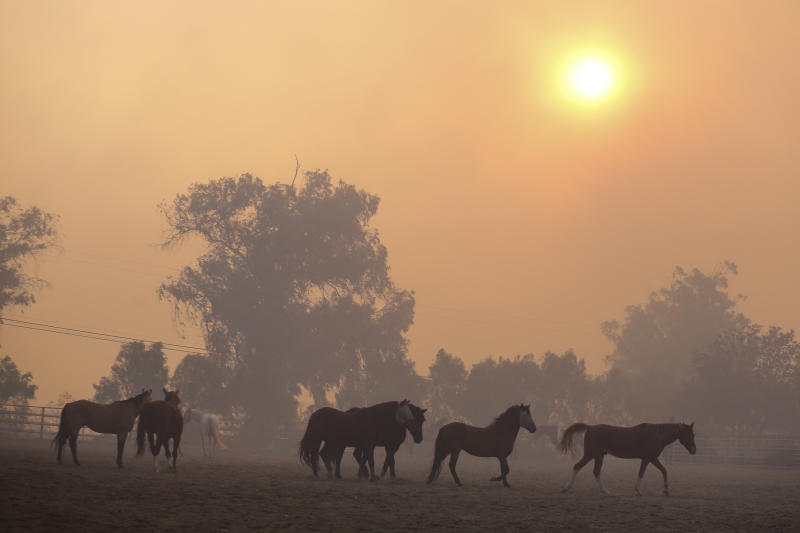 Horses are seen at a ranch in Simi Valley, Calif., Oct. 30, 2019. A large new wildfire has erupted in wind-whipped Southern California, forcing the evacuation of the Ronald Reagan Presidential Library and nearby homes. (Photo: Ringo H.W. Chiu/AP)