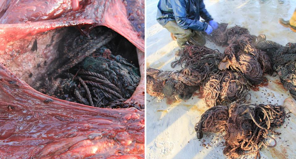 Bunches of rope from the inside of a dead whale washed up in Scotland.