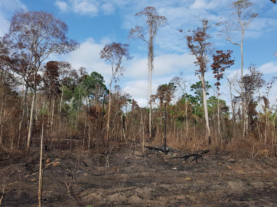 An Amazonian forest that burned during the 2015 El Niño (Erika Berenguer/PA)