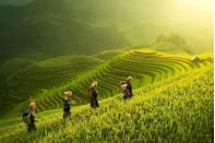 "<p>An isolated, rural district of the <a href=""https://www.tripadvisor.com/Tourism-g800616-Yen_Bai_Yen_Bai_Province-Vacations.html"" rel=""nofollow noopener"" target=""_blank"" data-ylk=""slk:Yên Bái Province"" class=""link rapid-noclick-resp"">Yên Bái Province</a>, this mountainous land is known for its picturesque rice field terraces.</p>"
