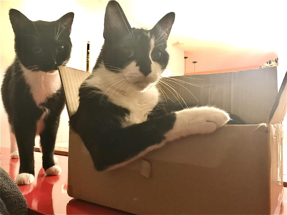 Meet Lupe and Willie. All dressed up and no need to go anywhere, bcause Walmart delivers! (Photo: Libby Sentz)