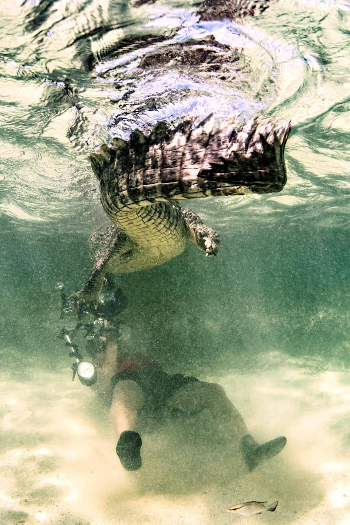 <p>Alex, who works in shark conservation and is the founder of Save My Fin, believes strongly that humans and wild animals can coexist and that crocodiles are not automatic killers. (Photo: Alex Suh/Caters News) </p>