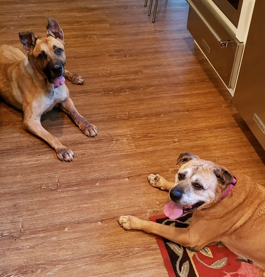 Sam and Brutus, two dogs adopted from the Asheville Humane Society, settle in to their new home. (Credit: Asheville Humane Society)