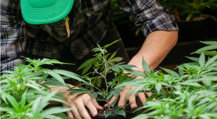 Penny Stocks Poised for Growth: Cannabis Wheaton Income Corp (CBWTF)