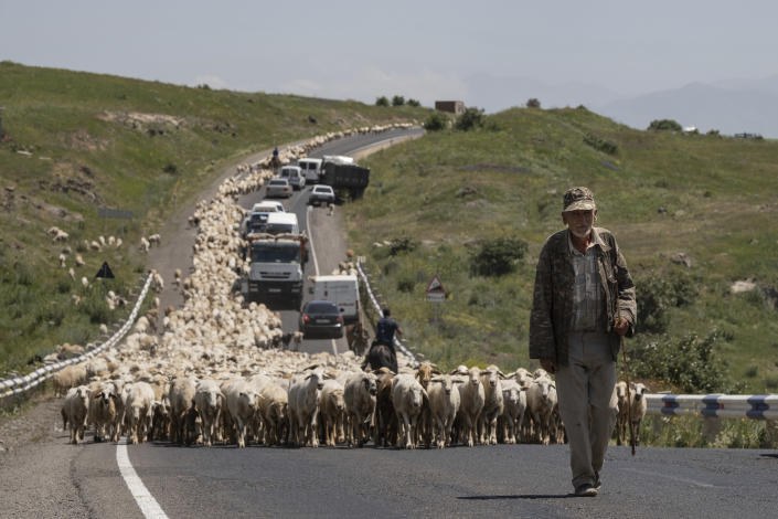 An elderly Armenian shepherd leads a huge flock of sheep along the road near Syunik, 212 km. (132 miles) south-east of Yerevan, Armenia, Wednesday, June 16, 2021. Armenians head to the polls Sunday for a snap parliamentary election stemming from a political crisis that has engulfed the former Soviet nation ever since last year's fighting over the separatist region of Nagorno-Karabakh. (AP Photo/Areg Balayan)