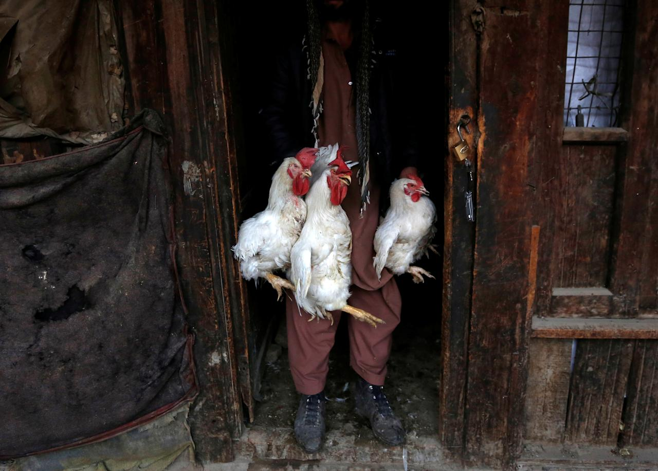 <p>A man carries roosters for sale at Ka Faroshi bird market in Kabul, Afghanistan, Jan. 18, 2018. (Photo: Mohammad Ismail/Reuters) </p>