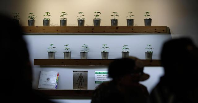 <p>Plants are on display during the first day of recreational marijuana sales at The Source dispensary, Saturday, July 1, 2017, in Las Vegas, Nev. (Photo: John Locher/AP) </p>