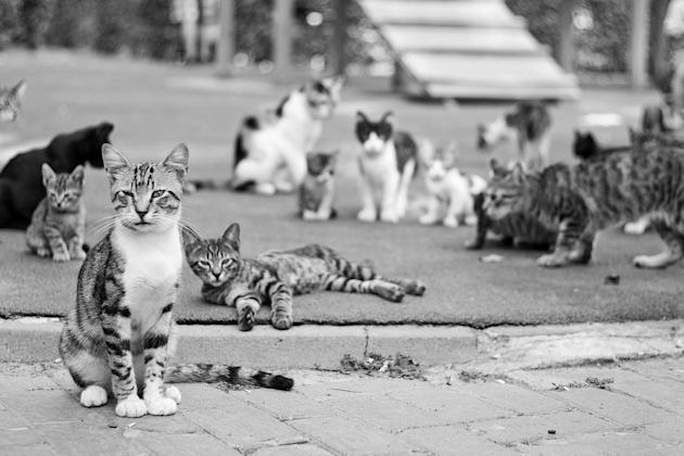 Cats lounging on a corner (Thinkstock)