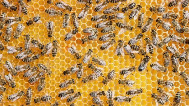 PHOTO: Honey bees on a on a honeycomb. (STOCK PHOTO/Getty Images)