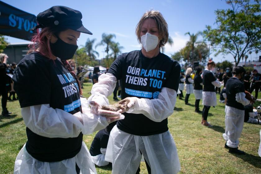 LOS ANGELES, CA - JUNE 06: An organizer gives a women a dead squirrel to hold at the 11th annual National Animal Rights Day in a mass funeral on Sunday, June 6, 2021 in Los Angeles, CA. (Jason Armond / Los Angeles Times)