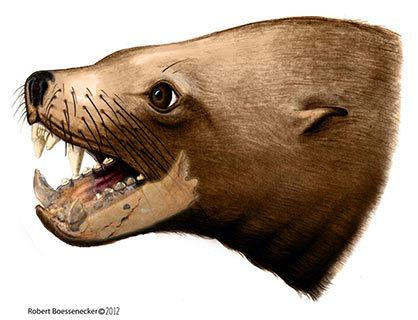 Ancient 'Killer Walrus' Not So Deadly After All