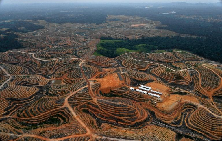 Plantations on Sumatra island and the Indonesian part of Borneo have expanded in recent years as demand for palm oil has skyrocketed, resulting in the destruction of vast tracks of jungle