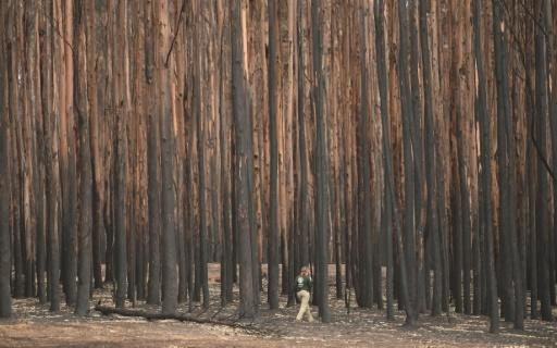 The fires have claimed 28 lives, scorched massive tracts of pristine forests and destroyed thousands of homes