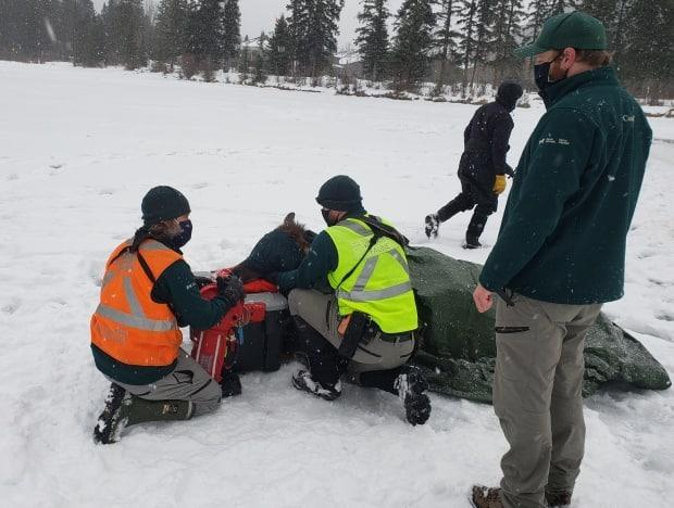 Blair Fyten, Parks Canada resource management officer, says the elk in the picture above was rescued in January and had to be warmed with blankets.