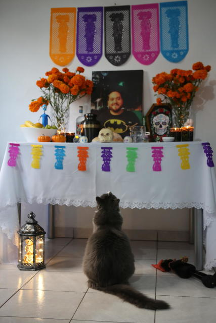 A pet cat named Actino looks at a Day of the Dead altar with a portrait of his former caretaker, Daniel Silva Montenegro, a doctor who died from symptoms related to COVID-19, at their home in Mexico City, Saturday, Oct. 31, 2020. The weekend holiday isn't the same in a year so marked by death in a country where more than 90,000 people have died of COVID-19, many cremated rather than buried and with cemeteries forced to close. (AP Photo/Ginnette Riquelme)