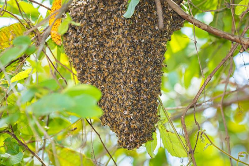 Swarm of 40,000 bees attacks police, firefighters in California, officials say