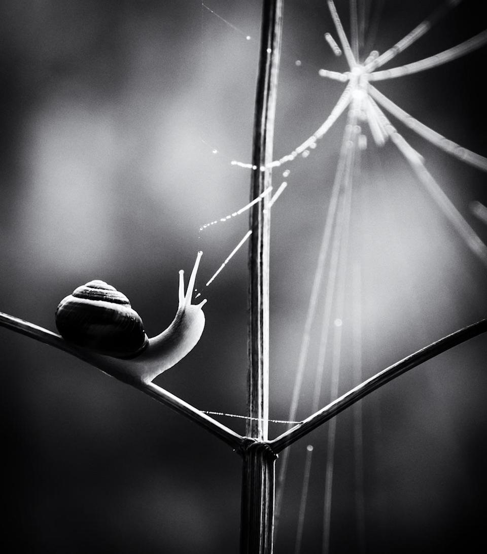 """<p>Winner of the Black and White category was Paula Cooper with this image, dubbed Web of Life, of a Brown-lipped snail taken in Thetford Forest, Norfolk. [Picture: Paula Cooper/<a href=""""http://www.bwpawards.org"""" rel=""""nofollow noopener"""" target=""""_blank"""" data-ylk=""""slk:www.bwpawards.org"""" class=""""link rapid-noclick-resp"""">www.bwpawards.org</a>] </p>"""