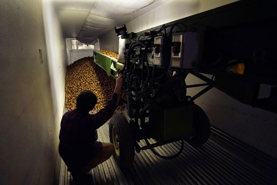 In a March 11, 2021 photo, potatoes are loaded into a tractor trailer at the Sackett Potato farm in Mecosta, Mich. For generations, Brian Sackett's family has farmed potatoes that are made into chips. About 25% of the nation's potato chips get their start in Michigan, which historically has had reliably cool air during September harvest and late spring but now is getting warmer temperatures. (AP Photo/Carlos Osorio)