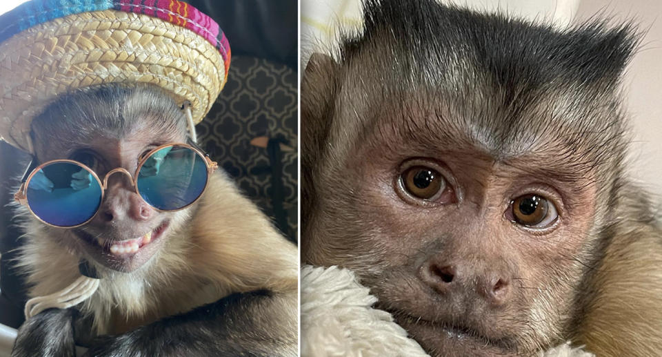 George, the cheeky social media star, poses with a hat and sunglasses on.