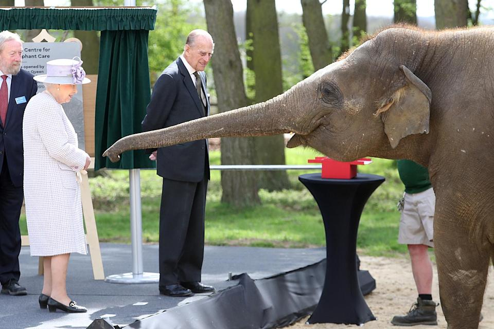 """<p>Jackson calls this 2017 photo with Donna the Asian elephant """"one of my more unexpected images of the Queen and the Duke of Edinburgh."""" The meet-and-feed photo opportunity at the Whipsnade Zoo's Centre for Elephant Care """"certainly amused the Duke, who had a broad grin on his face as Donna extended her trunk, full stretch, keen to snaffle another banana from the unsuspecting monarch's pocket, while some concerned-looking zookeepers kept watch, ready to restrain the huge animal at any sign of trouble.""""</p>"""