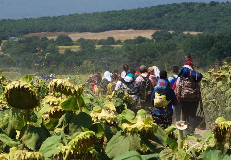 A group of refugees, mostly Syrian, walk through a field of sunflowers in in Idomeni, Greece, as they travel towards the Macedonian border on August 13, 2015 (AFP Photo/Joe Sinclair)