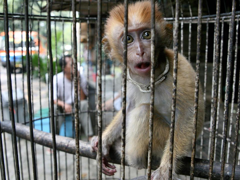 Animals are widely kept in cages at live markets around the world, raising the risk of viruses spreading, according to scientists (AFP via Getty Images)