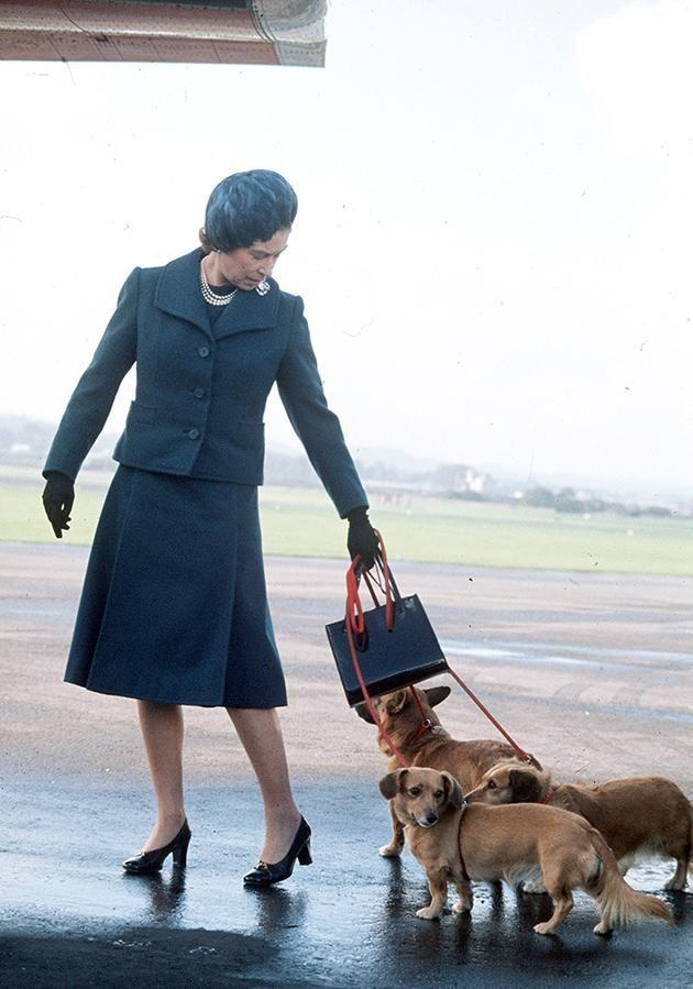 It's been said that the Queen's corgis rule the roost in Buckingham Palace. Photo: Getty Images